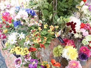 asca-flower.jpg